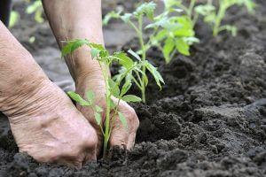 Pflanzen einsetzen